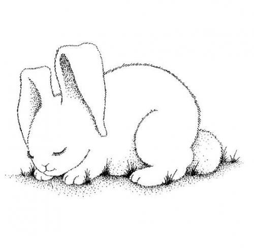 Immagine coniglio da colorare