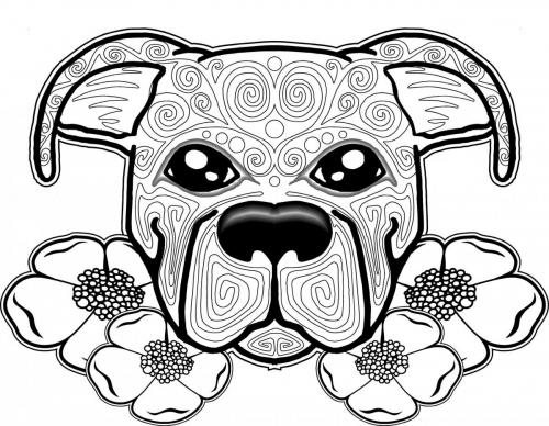 immagine di cagnolini