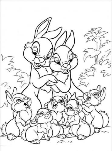 Immagine di coniglio