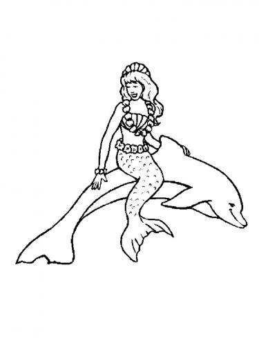 immagine di delfini