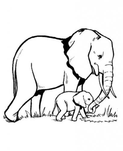 immagine di elefante