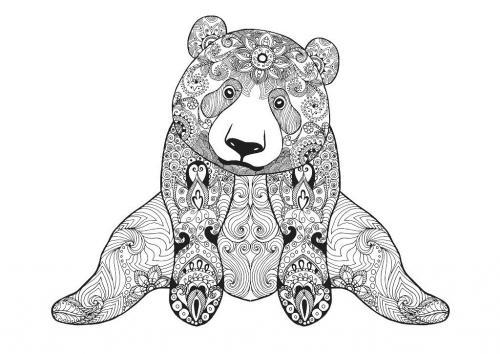 immagine di orso