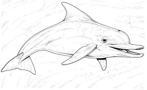 immagine di un delfino