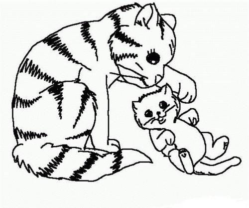 immagine gatto da colorare