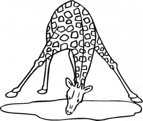 immagine giraffa disegno