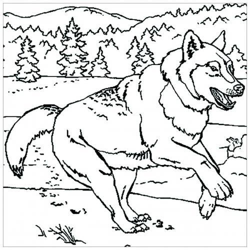 immagini cane lupo