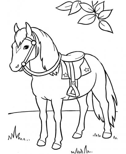 immagini cavalli