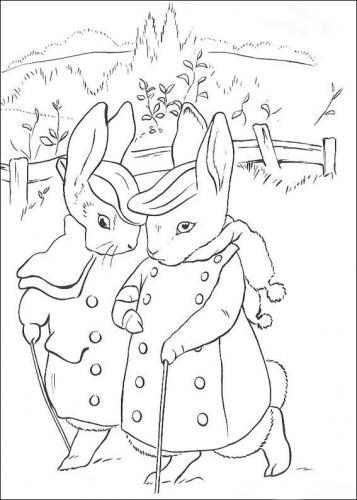 Immagini conigli