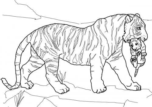immagini cuccioli di tigre