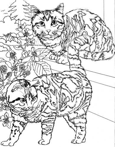 immagini da colorare di gatti