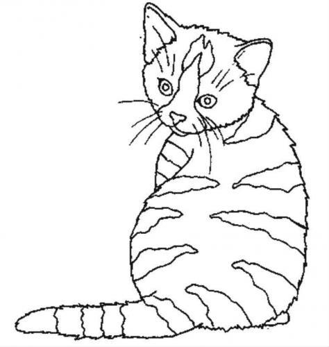immagini da colorare gatti