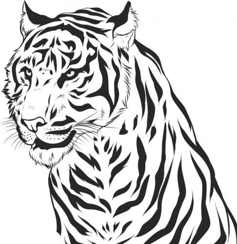immagini da colorare tigre