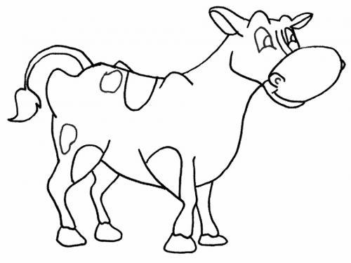 mucca con muso grande