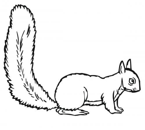 immagini da disegnare scoiattolo