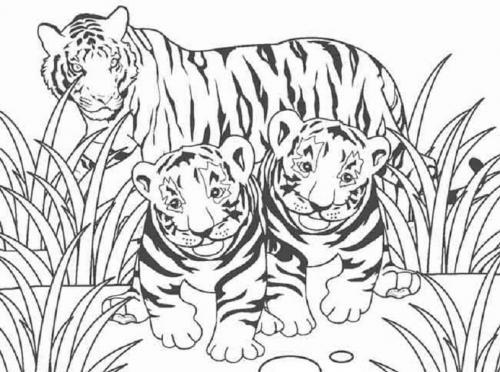 immagini da disegnare tigri