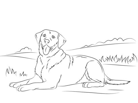 immagini dei cani