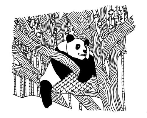 immagini dei panda