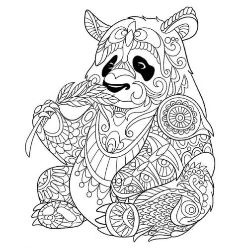 immagini del panda
