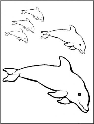 immagini delfini da stampare