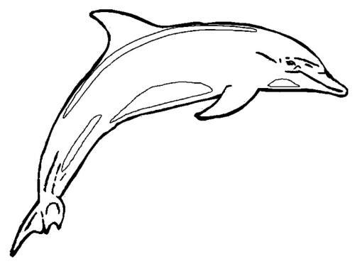 immagini delfini gratis