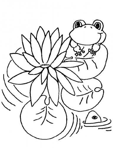 immagini della rana