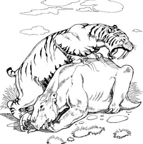 immagini della tigre dai denti a sciabola