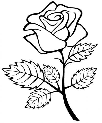 rosa con le foglie