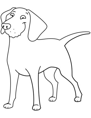 immagini di cani bellissimi