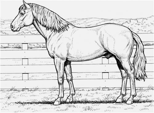 immagini di cavalli a matita