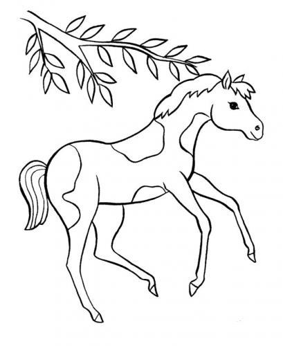 immagini di cavalli da colorare e stampare