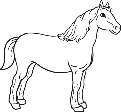 immagini di cavallo