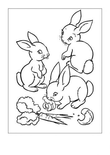 Immagini di conigli