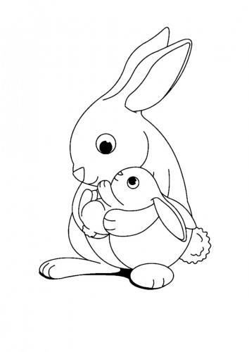 Immagini di coniglietti