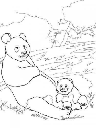 panda con il cucciolo