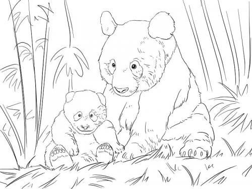 due panda cuccioli