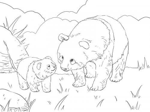 immagini di cuccioli di panda