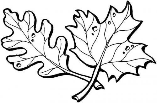 immagini di foglie autunnali da colorare