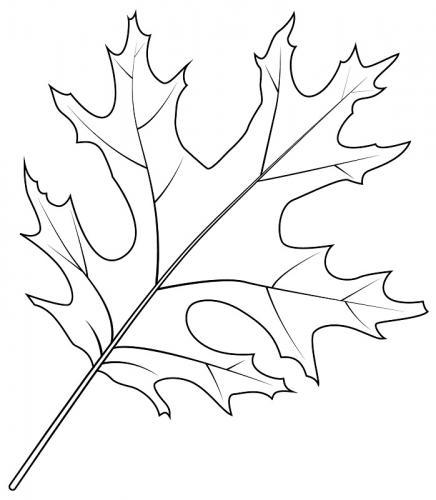 immagini di foglie da colorare