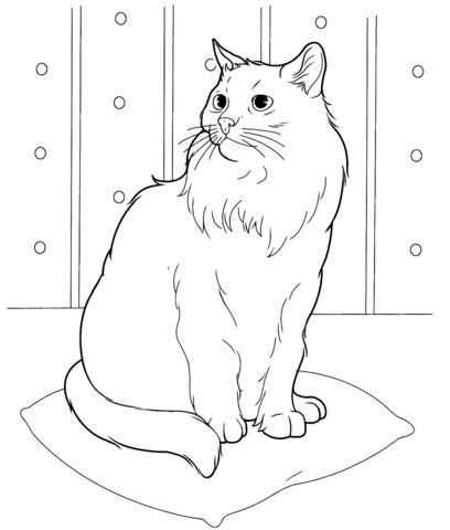 immagini di gatti da colorare