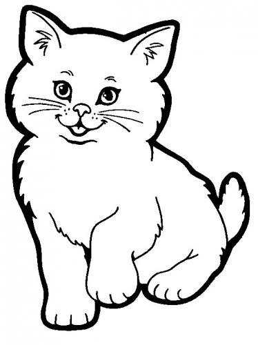 immagini di gatti