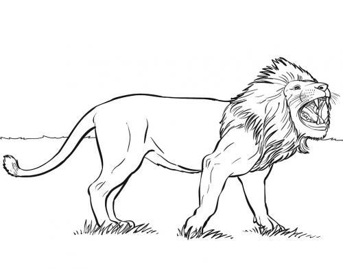immagini di leoni da colorare