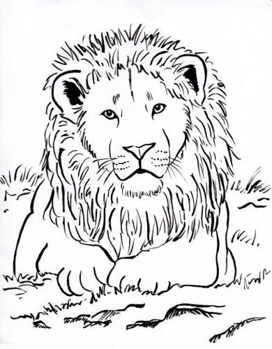 immagini di leoni