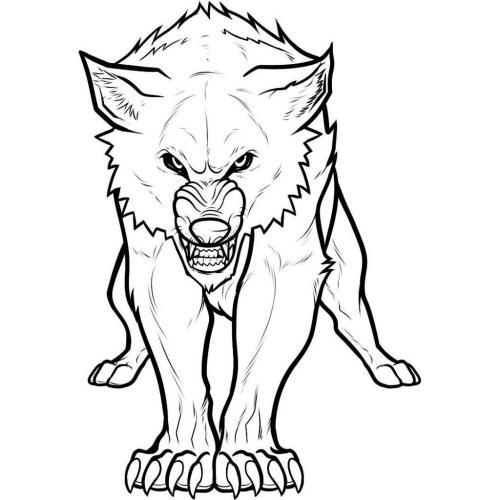 immagini di lupo