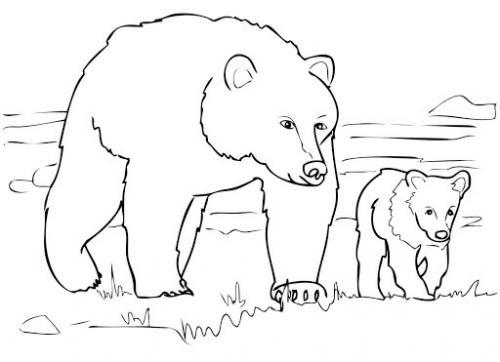 immagini di orsi da disegnare