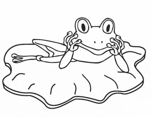 immagini di rane divertenti