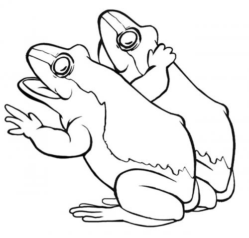 immagini di rane