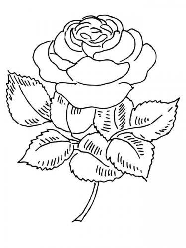 rosa bellissima da colorare