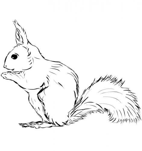 immagini di scoiattoli da colorare