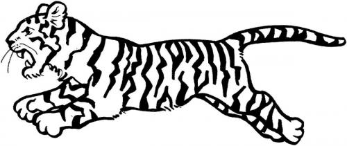 immagini di tigre arrabbiata