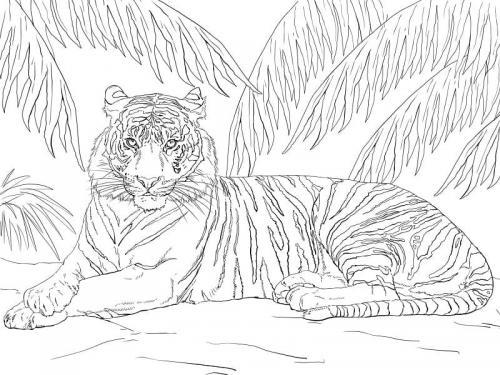 immagini di tigre da colorare